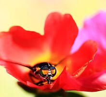 flower fly by NicoleConrau