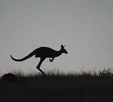 Kangaroo on the Move, against a Darkening Sky - Whittlesea, Victoria by Heather Samsa