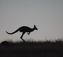 Kangaroo on the Move, against a Darkening Sky - Whittlesea, Victoria by Heather Samsa