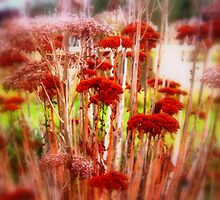 Red Flower by Tracey Phillips