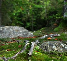 Mossy Path in the Forest by Hilda Rytteke