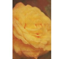Vintage Yellow Rose vertical Photographic Print