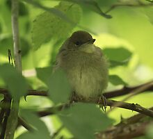 Black Cap by JandD
