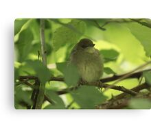 Black Cap Canvas Print