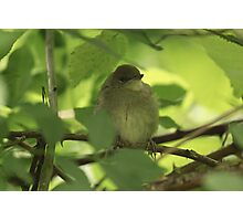 Black Cap Photographic Print