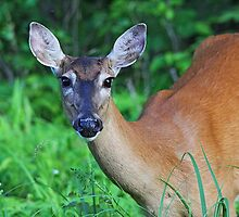 Doe Eyes by Vickie Emms