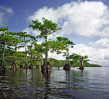 Blue Cypress Lake #1 by chris kusik