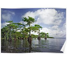Blue Cypress Lake #1 Poster