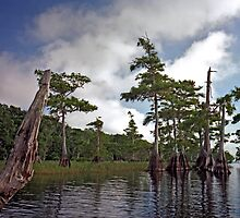 Blue Cypress Lake #2 by chris kusik