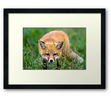 Fox kit in the grass Framed Print