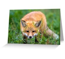 Fox kit in the grass Greeting Card