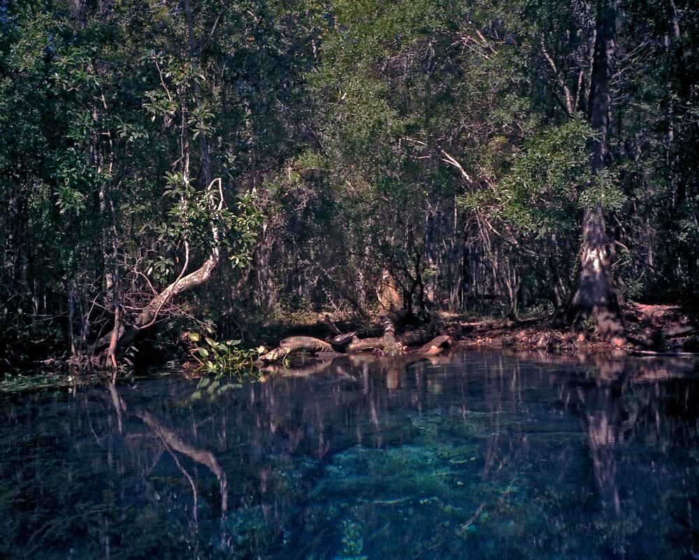Wacissa Springs #1. by chris kusik