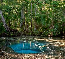 Chassahowitzka Springs. by chris kusik