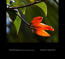 Vibrant Orange - - Posters & More by Maria A. Barnowl