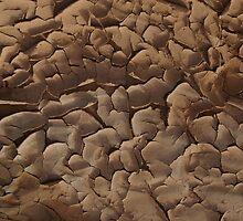 Muddy Terrain by Dinorah Imrie