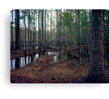 Pine Forest Wetland. Canvas Print