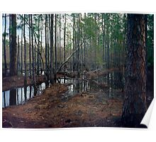Pine Forest Wetland. Poster