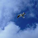Kalk Bay seagull by fourthangel