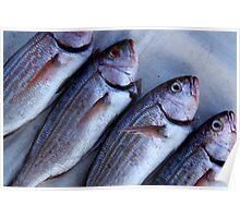 Kalk Bay fish Poster