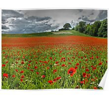 A Field of Poppies - HDR Poster