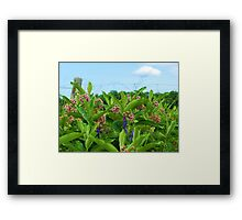 A country garden Framed Print