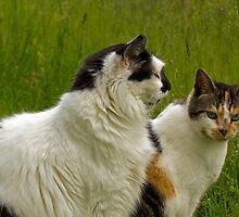Best Friends by Lynn Gedeon