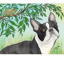 Boston Terrier Dog Tree Frog Cathy Peek Animals Photographic Print