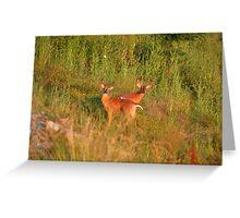 Sunset Bucks Greeting Card