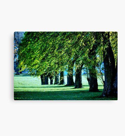 Sunlit Treeline Canvas Print