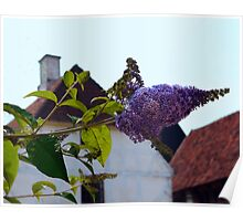 Butterfly Bush in Old Danish Town Poster