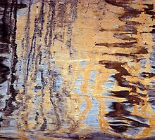 Wood Grain Stains 4 by Scott  Cook