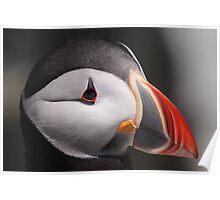 Puffin Portrait Poster