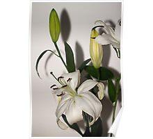 White Lily Spray Poster