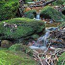 Tiny Falls by Tim Beasley