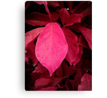 drops on red Canvas Print