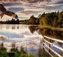 Red Kite Flying by Sam Smith