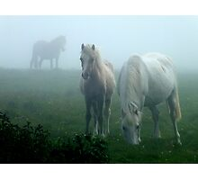 Ponies In The Mist Photographic Print