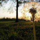 Sunset Wishes by peepholephotos