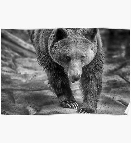 Elder Bear Poster