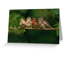 FINCH FAMILY Greeting Card