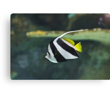 Saltwater Angel Canvas Print
