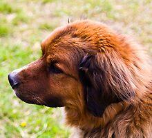Teddy Bear of a Dog by Sharlene Rens