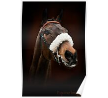 Racehorse Poster