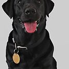 Doris is a very lovely and lively Labrador. by Peter Rivron