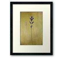 Parchment Lavender Framed Print