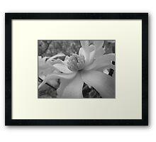 Magnolia 6 Framed Print