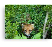 Fox Chase Canvas Print