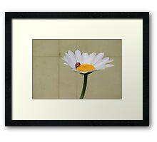 Parchment Daisy and Ladybug Framed Print