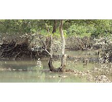 Nature - Sundarban Photographic Print
