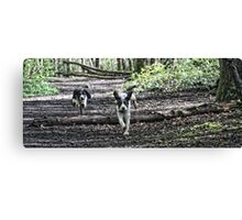 Benson chasing Jess in woods Canvas Print